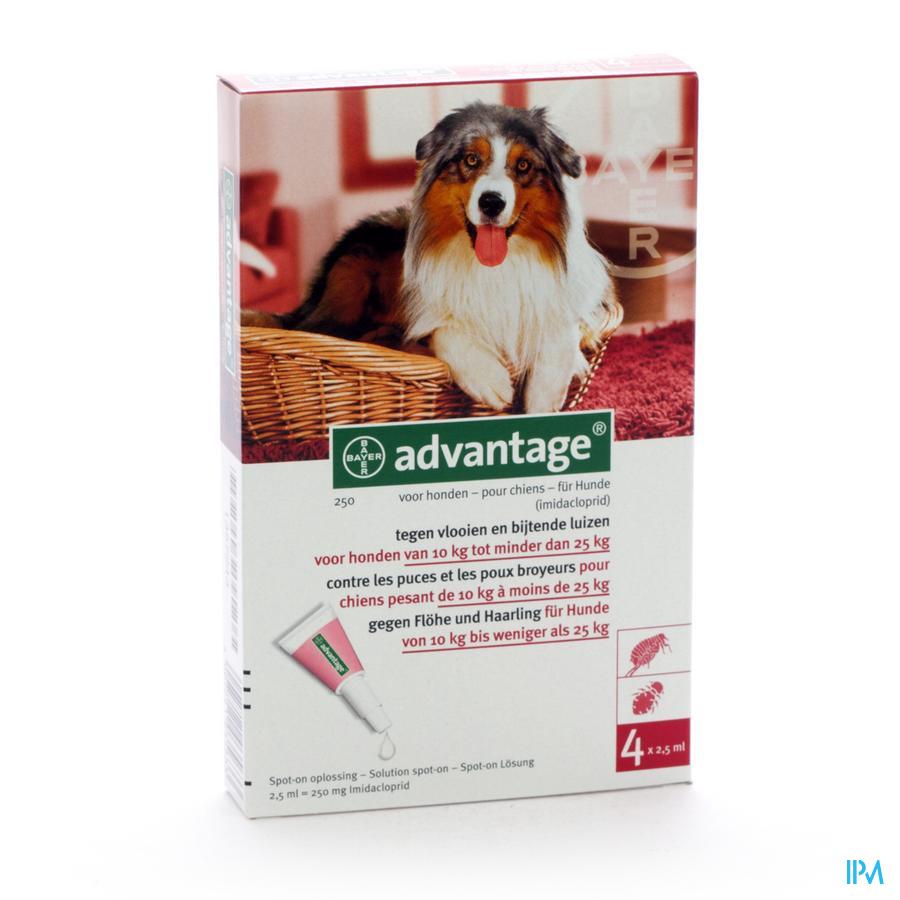 Advantage 250 Honden 10